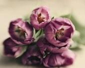 purple floral art, tulip art print, girls decor, beige wall art, romantic art, cottage chic art, romantic wall art, floral nursery art