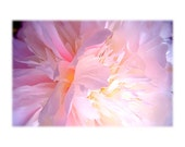 Flower Photography Pale Pink Peony Macro Close Focus white dreamy light infused ethereal