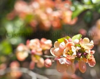 Digital Download  - Central Park Flowers