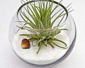 ZODIAC GEMINI terrarium-birthday gift, air plants, home decor, baby shower, zodiac, gemini, , horoscope, terrarium, air plant, sand art