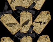 9 Vintage Birds TAGS printable digital download