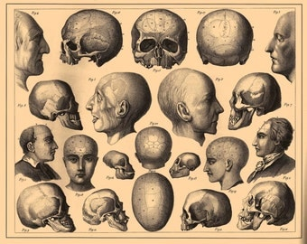 Human Skull Anatomy Skeleton on the reprinted page from Soviet Union Encyclopedic Dictionary