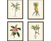 Antique Botanical Print Set of 4 8x10 Art Prints Beach Cottage Decor Wall Art Tropical