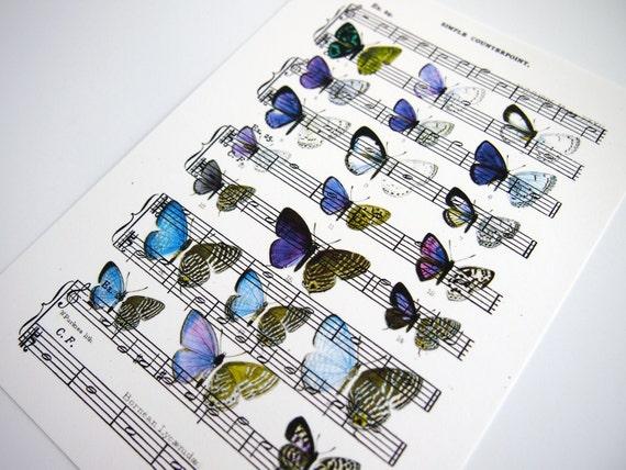 Butterflies Art Images Butterflies Art Print