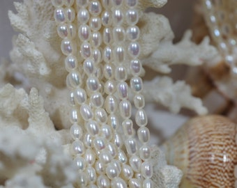 Rice Freshwater Pearls 5.2X3.8 mm Craft  Supplies Jewelry Making Beads Natural Pearl