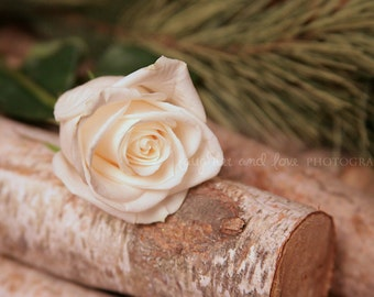 Rustic Romance Fine Art Photography Shabby Chic White Cream Ivory Neutral Rose Birch Pine Winter Floral Flower Cabin Home Decor Wall Art