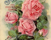Vintage Scott Roses Seed Packet Print Digital Download File Art