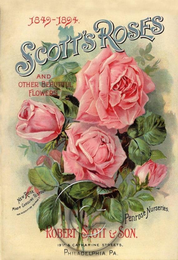 Vintage Scott Roses Seed Packet Print Digital Download File