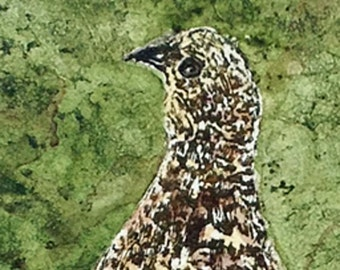 """Summer Ptarmigan is an original 4""""x6"""" etching with aquatint and hand coloring"""