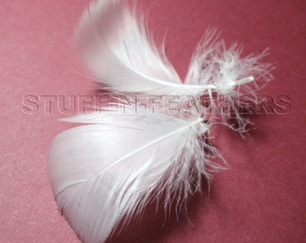 WHITE GOOSE coquille feathers, small curled loose feathers for wedding, accessories, crafts, millinery, real feathers, 12  pieces / F57-1