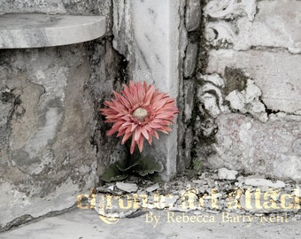 Fine Art Photograph Flower in the Cemetery