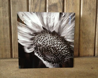 """Hope---A photograph of a sunflower infused onto an 8x8"""" high-gloss metal plate"""