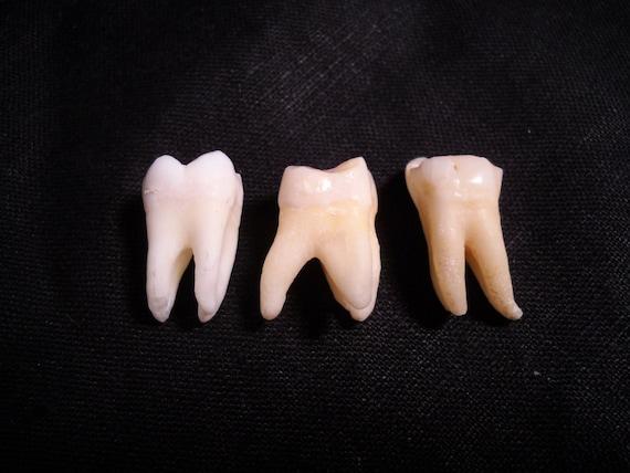 Real human teeth - photo#27
