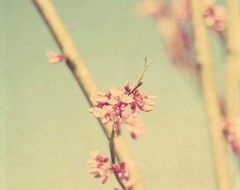 spring, teal, pink, blossoms, floral, blue, fine art photography