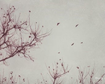 winter, bare, nature, birds, flying, fine art photography