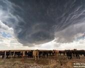 Rotating Severe Thunderstorm Above a Herd of Cattle near Sitka, Kansas