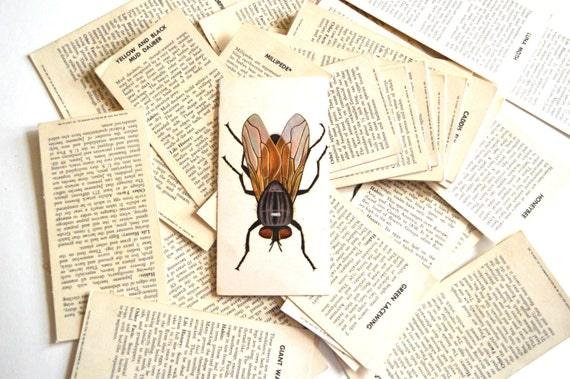 Vintage Flash Cards Teach Me Insects 1960's