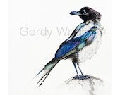 Magpie Watercolours Giclee Print