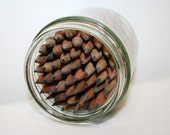 50 pencils in a jar, brown pencil set, vintage teacher supplies wooden miniature pencils, office craft supplies pencil mini, glass jar