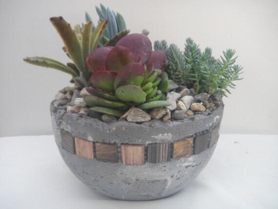 Succulent Oasis Contained In A Unique Garden Planter