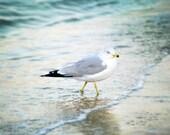 Sea Gull Photograph, Ocean Print, Beach, Coastal Home Decor, Jersey Shore, Ocean Waves, Beach Theme, Sea