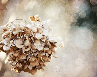 Winter Slumber - Hydrangeas in Winter Fine Art Photo Print - 20x30 Print - Nature Photography