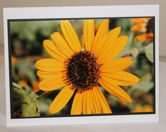 photo card, yellow flower, sunflower photograph