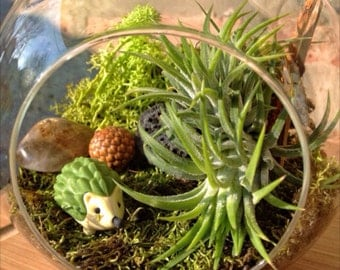 Childrens Hedgehog and Air Plant Terrarium A Perfect Valentines day or Birthday Gift