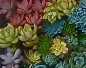25 SUCCULENT CUTTINGS, rosettes, colorful, yellow, pink, purple, blue, green....