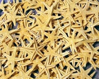 "Flat Starfish 1""-2"" (Case Pack 72)"