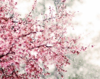 Cherry Blossom Print, Sakura Photo, Pink Snow Flower, Nature Photography Wall Art, Fine Art Home Decor