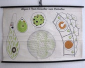 Vintage. Pull down chart. Mid Century. Educational. German DDR. Biology. School. Science. Poster. Canvas. Algae (204)