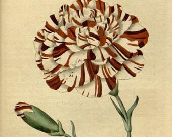 Wall art botanical, Nature botanical, Botanic illustration,  39