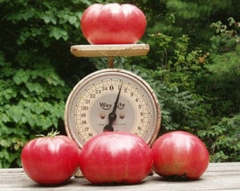 Heirloom, Beefsteak Tomato Seeds, Easy To Grow, Up to 1 lb or More, 25 Seeds