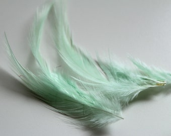 Mint Green Hackle Hen Feather Fringe / 20 loose feathers