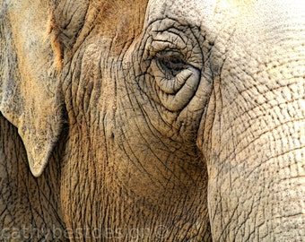 Elephant's Eye Fine Art Photograph
