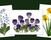 Spring Flowers - set of 6 Pressed Flower Notecards
