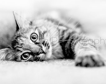 Cat Photography - Curious Cat Photo - Kitten Print - Torby Photo Print Black and White- 8x10 8x8 10x10 11x14 12x12 20x20 16x20 - Photography