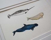 3 Whales - Original Watercolour Illustration