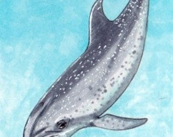 "Original ACEO Sketchcard  ""Atlantic Spotted Dolphin"""