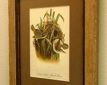 antique lithograph print of birds