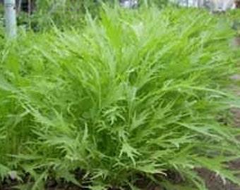 MIZUNA seeds, heirloom  garden greens
