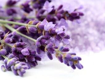 Lavender seeds, garden flower, aromatic Lavandula spica,350,gardening, lavandula spica, Λεβαντα