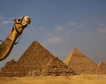 Pyramids of Egypt with Camel