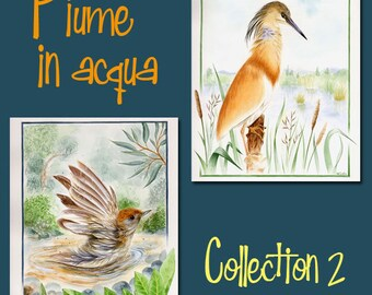 20% DISCOUNT Birds - naturalistic Art Print - Offer - Set of three - Limited Edition - Two sets - Squacco heron - Blackcap