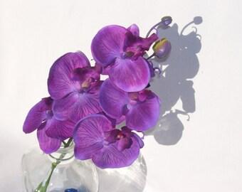 6 Stems Purple Violet 5 Bloom Phalaenopsis Orchids