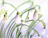 Snowdrops 4 Watercolor greeting Cards Blank Notecard Set, watercolour art cards