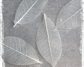 Natural Skeleton Leaves - Pressed, Dried - Bulk Lot of 100 - Scrapbook, Weddings, Card Making, Art Supply, DIY - Decorative Leaf