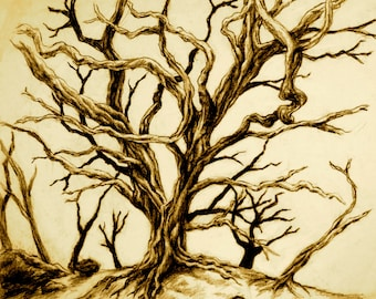 Tree with long twisted bare branches without leaves Hawaii 4 x 6 CARD print of original charcoal drawing