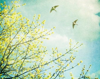Nature photography, Swallows, Spring, trees, birds, flying, nature, wall art, home decor.